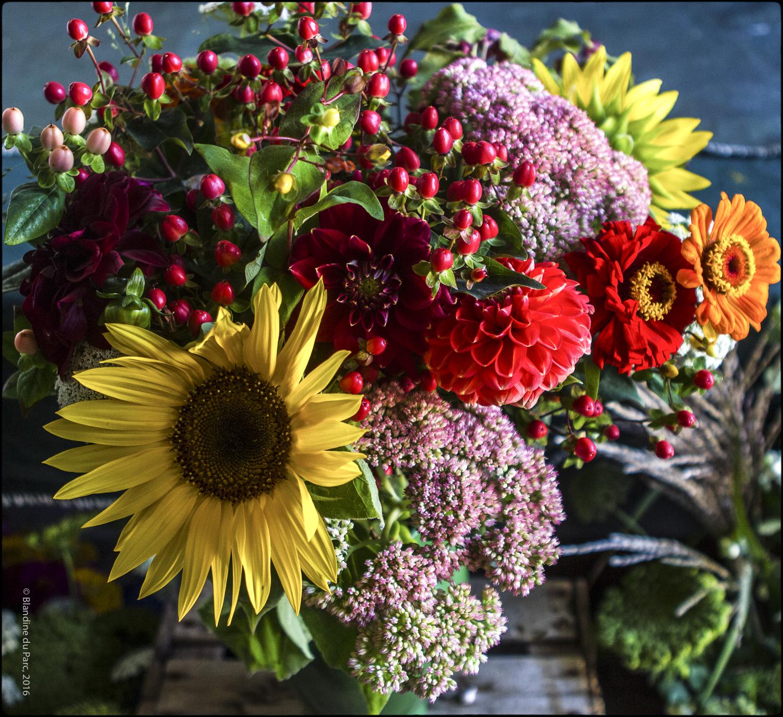Bio Fleur de Soleil – Photo © Blandine du Parc
