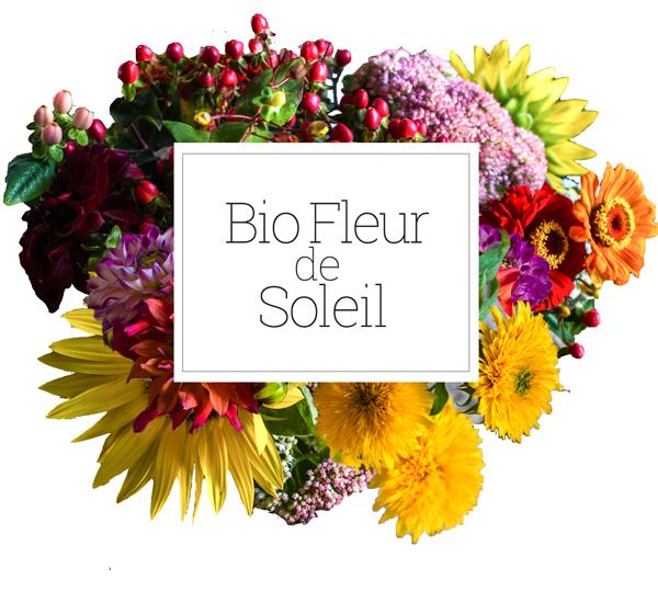 Bio Fleur de Soleil - Fleurs Bio