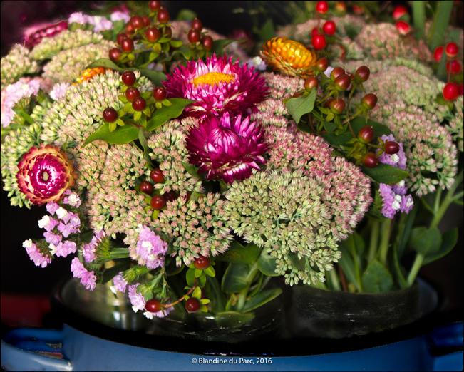 Bio Fleur de Soleil – Photo©Blandine du Parc
